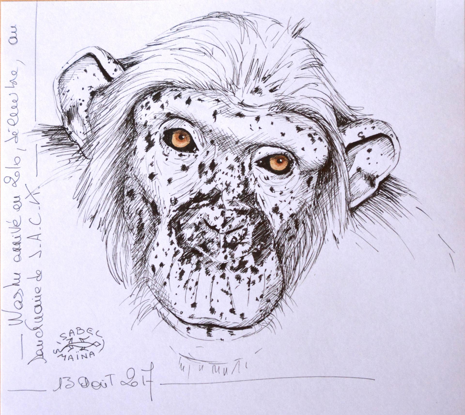 Washu, chimpanzé