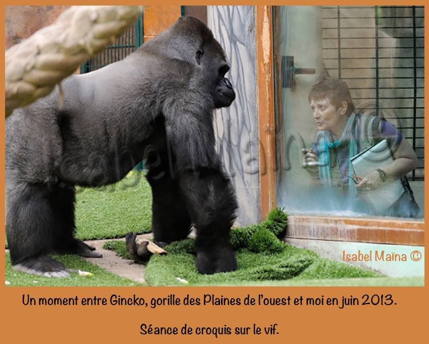 Gincko, gorille des plaines de l'ouest