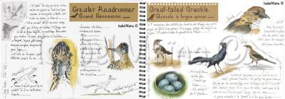 Greaterroadrunner greattailedgrackle